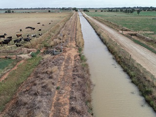 Dairy farm in the Murray-Darling Basin